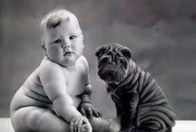 dogs, pets, dog friend..amor de cão  <3 shar pei love <3