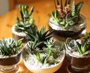 Green Thumb | Succulents / They're so meaty and rubbery! I love them!