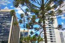 Brasil   Curitiba - PR / Tudo sobre Curitiba, a cidade capital do Paraná cheia de influencia européia, inclusive o inverno.