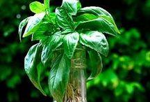 Herb Garden / Tips, tricks and gardening inspiration for the herbal gardener. www.wishgardenherbs.com