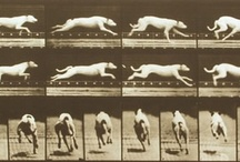 Eadweard Muybridge / (Kingston upon Thames, 9 april 1830 –Kingston, 8 may 1904)