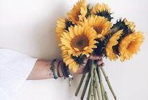 bloom / beautiful flowers