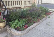 Gardening / Growing plants in a downtown apartment (who knew anyone can do it?!)