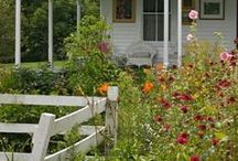 For the garden (and yard) / We just bought 15 acres of pretty untouched land; most we plan to keep natural - Florida Sandhill ecosystem - but here are some ideas we have for a couple acres of vegetables, fruit trees, and native flowers.  / by HaldeCraft