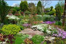 krásy přírody / rostliny