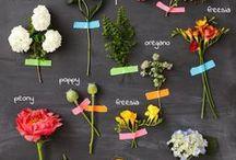 garden stories / by Solo Benedyuk