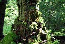 Fairy Gardens / by Heather Smith