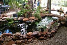 Aquaponics, pools & ponds / by Heather Smith