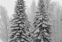 White Christmas / by Shirlene James