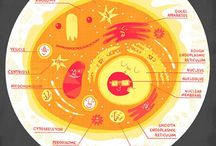 Infographics and Science