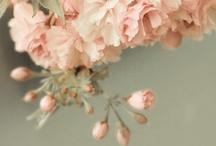 ✒ Spring