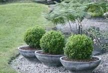 ✒ Garden...