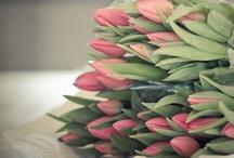 ✒ Flowers