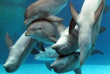 Dolphins & Porpise  / by Boo Jay