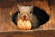 Squirrels / by Boo Jay