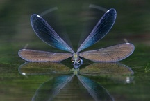 Dragonfly / by Boo Jay