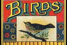 Birds / by Boo Jay