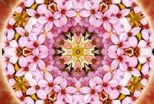 Mandalas / by Boo Jay