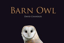 Barn Owls / by Boo Jay