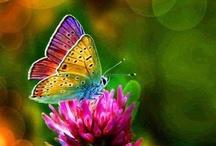 Butterflies & Moths / by Boo Jay