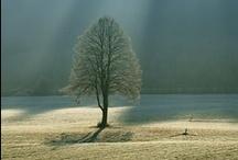light & shadows \\