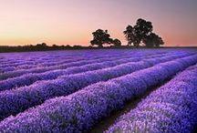 ✒ Lilac