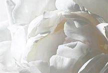 ✒ White