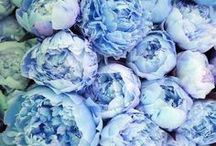 ✒ Blue