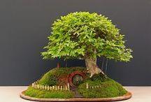 Bonsai / Loving Bonsai - Japanese art form using miniature trees grown in containers.