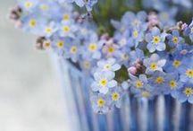 frühling......springtime.........................