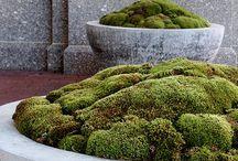 EXTERIOR / gardens, growing food, urban gardens, farms, landscape design