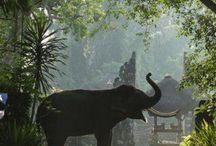 Exotismos orientales y tropicales