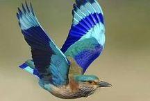 Birds / Random birds for references