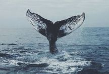 Deep waters & sea creatures