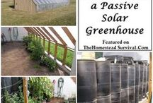 DIY Greenhouses / Ideas to make my own Greenhouse