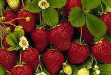 Gardening: Strawberries