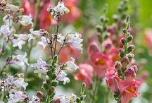puutarha / Colorful garden