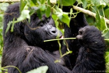Untamed Odyssey Photographic Safaris and Expeditions / Photographic Safaris led throughout Southern & Eastern Africa!