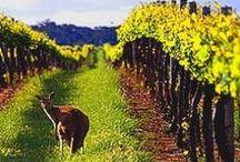 Australian boutique wine / Australian Boutique Wine