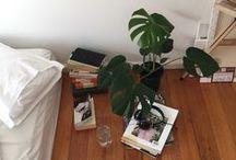interiors + indoor plants