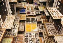 entomologue