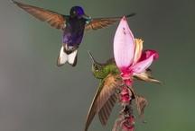 I love hummingbirds :)