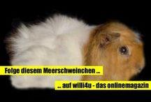 willi4u / willi4u - das onlinemagazin für kurzweiler und wissbegierige. Die besten Szenen aus dem Leben von Meerschweinchen Willi. / by willi 4u
