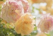 Soft / Light Spring color palette