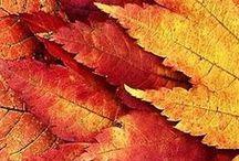 True / Warm Autumn color palette