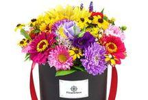 Buchete Flori / Floraria online TrimiteFloriLaIasi.ro este o florarie ce livreaza buchete si aranjamente florale pe toata raza judetului Iasi de luni pana duminica non-stop. Livrarea pe raza orasului Iasi este gratuita. In magazinul nostru online veti gasi o gama variata de buchete si aranjamente florale ce se diferentiaza prin originalitate, simplitate si bun gust. De asemenea livrarea buchetelor se face in mod profesionist, in timp util si cu o atentie sporita acordata detaliilor.