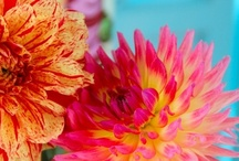 Flowers / by Elizabeth Wood