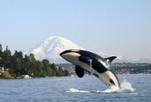 Whales....Let's save them / Whales are so smart and graceful.  Endangered we need to help save them.