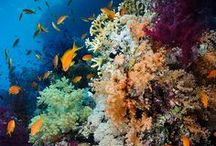Let's take a look under the sea! / Diving in beautiful blue waters.  Places we have been and would like to go!