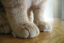 素敵な猫たち / 心から気に入ってる画像たち。猫以外もあり。